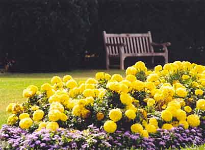 Bench behind flowers